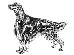 30527irish-setter-from-ankc