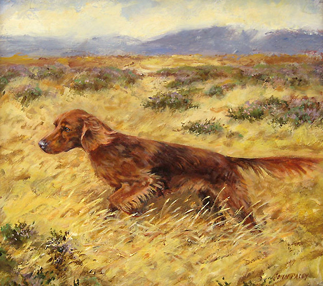 Paley - Irish Setter L